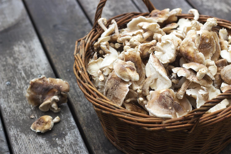 Dyrk selv svampe med Tvedemose